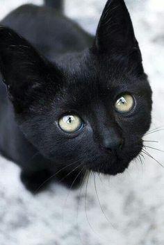 Black tıger