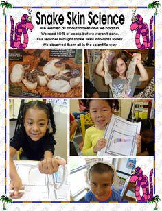 REAL Snake Skins All About Snakes, Kindergarten Science, Snake Skin, Teacher, Reading, Books, Fun, Professor, Libros