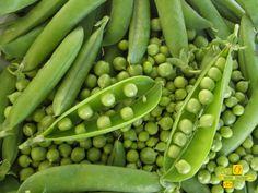Estos guisantes, tiernos tiernos los disfrutarás en tu casa durante el mes de junio. http://www.lahuertadeanamary.com/hortalizas-y-conservas/hortalizas-2/otras-hortalizas-5/guisantes-frescos-con-vaina-12.html