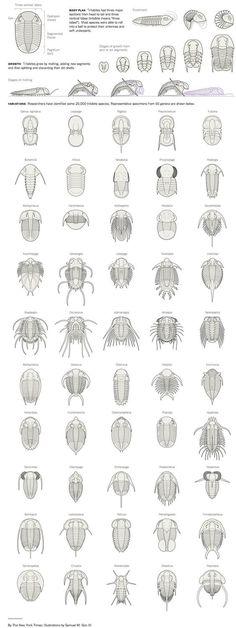 Miniguía de trilobites