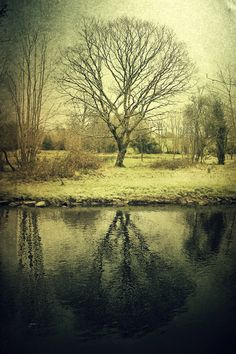 Reflected Tree (by Child of Danu)