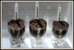 Self watering seed starters.  (note - other instructions say that her picture on the right is the correct way to do it, add a wick from the top container to the bottom, instead of having the top sitting right in the water.)