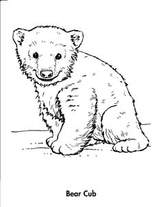 bear cubs coloring page | coloring, book coloring, animals, bear, cub