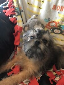 YORKSHIRE AFFENPINSCHER  males Humane Society, Yorkshire, Dogs And Puppies, Adoption, Pets, Animals, Foster Care Adoption, Animales, Animaux