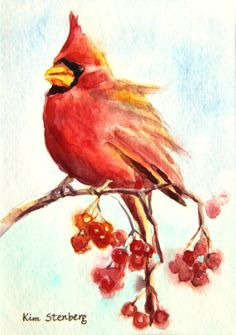 "Cardinal Painting Original Watercolor ""Cardinal and Red Berries"" by KimStenbergFineArt, $80.00"