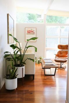 Mid century modern decor. Eames lounger and Nelson bench. Yes!