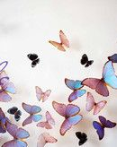The Butterfly People, San Juan, PR.