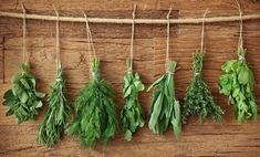 Herbs and spices are jam-packed with health-promoting chemicals, and they have more antioxidants than most fruits and vegetables. Here are five herbs and spices that are especially great for fending off disease. Tips & Tricks, House Smells, Growing Herbs, Medicinal Herbs, Healing Herbs, Fruits And Vegetables, Freezing Vegetables, Fresh Herbs, Herb Garden