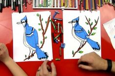 How to draw a blue jay!