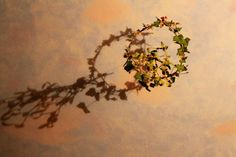 how to make an indoor Christmas wreath with mistletoe