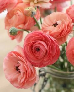 Ranunculus for pinks