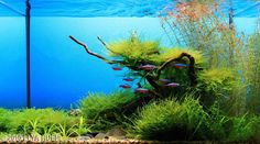 #Freshwater #Tank