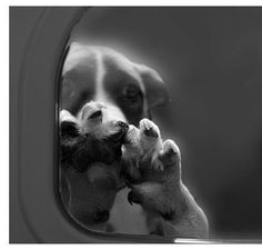 Breaks my heart! END THE GAS CHAMBERS!