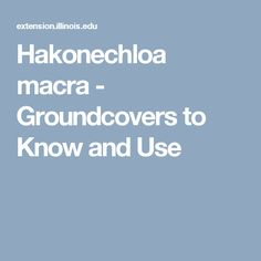 Hakonechloa macra - Groundcovers to Know and Use