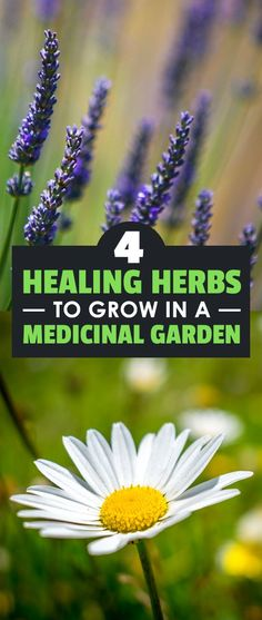 Medicinal herbs are surprisingly easy to grow and have a whole host of health benefits. Learn 4 of the best ones to try in your garden.