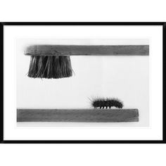 """Global Gallery 'Dear Friend' by Stefano Mallus Framed Photographic Print Size: 26"""" H x 36"""" W x 1.5"""" D"""