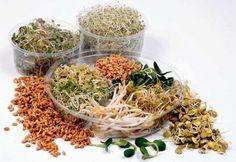 a melhor imunidade aumentar minerais para incluir o seguinte: -cálcio -magnésio -ferro -selênio -zinco