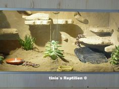 gecko+terrarium | Leopardgecko-Terrarium von Corrado aus der Schweiz