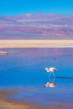 Who knew Chile was so beautiful? The landscapes around San Pedro de Atacama are absolutely breathtaking. My favorites: Piedras Rojas (Red Stones) and Salar de Atacama (Atacama Salt Flats). || Photo: Atacama Salt Flats || Click the post for more information.