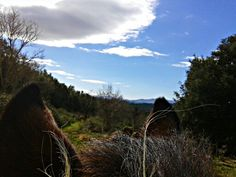 Looby's view from her stable in #Tuscany