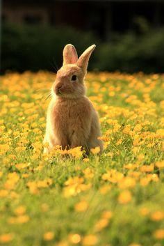 Bunny in a field of flowers