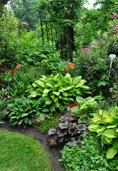 A mix of perennials including several hosta, a Brunnera, a Heuchera and a Pulmonaria.