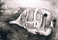 Copperband Butterflyfish - Black and white watercolor art print by LelianaShop on Etsy Watercolor Paper, Watercolor Paintings, Original Paintings, Black Ink Art, Star Gift, Running Horses, One Pic, Art Prints, Black And White