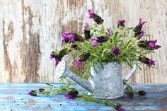Plechová krhla s jemným dezénom poslúži ako váza pre krásne sfarbené fialové kvety. Kombinácia, ktorá stojí na pohľad.