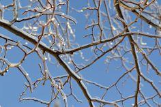 Winter's ice storm. #icestorm #photography
