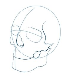 How To Draw skull human step 1 (2)