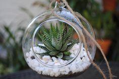 Succulent Terrarium Kit-Plant Terrarium-Glass Terrarium-Glass Orb-DIY Succulent Kit-DIY Terrarium Kit-Zebra Plant-Terrarium Home Decor