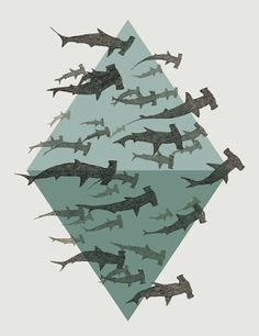 Do you love Hammerhead Sharks? Yes you do!