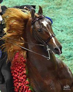 WGC Marc Of Charm Horse Training Tips, Horse Tips, Horse Stalls, Horse Barns, Pretty Horses, Beautiful Horses, Horse Saddles, Western Saddles, American Saddlebred