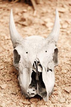 animal-skull-164258_960_720.jpg (480×720)