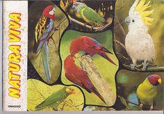 NATURA-VIVA-serie-Conoscere-ediboy-039-79-sticker-book-empty-album-figurine-vuoto Sticker Books, Empty, Album, Painting, Art, Painting Art, Paintings, Kunst, Paint