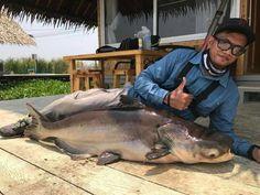 Mekong catfish fishing at new Bungsamran Lake near Bangkok
