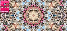 Catleidoscope, A Kaleidoscope-Like Website Made Up of Internet Famous Cats