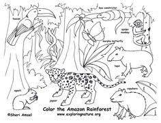 Resultado De Imagen Para Viajar Dibujo Habitat De Animales Animales De La Selva Viajar Dibujos