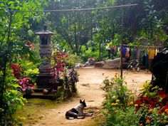 Le village de Munduk est un incontournable lors d'un voyage à Bali. Voici la liste de ce qu'il y a à faire à Munduk et on vous explique pourquoi y aller.