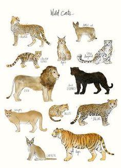 Wild Cats - Amy Hamilton - Leinwandbild