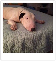 """Bob is doing wonderful in his foster home!  From his foster mom: """"Heading to Colonial Lake with BoB Barker to meet Purely Positive Dog Tr..."""