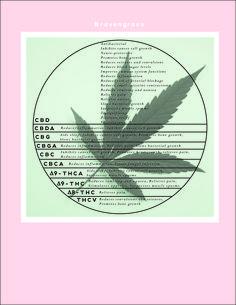 cannabinoids infographie #cannagirls