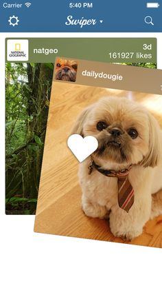 Swipe Instagram photos to the right to like it. #free #app #launch