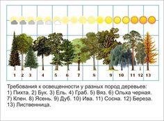 """""""Северный сад"""" ландшафтный дизайн, озеленение"""