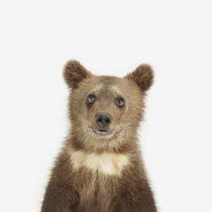 Bear Cub Little Darling