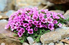 41 Ideas landscape plants design how to grow Flower Garden, Flowers, Landscape Design, Landscape, Perennials, Plants, Plant Design, Fairy Garden, Landscaping Plants