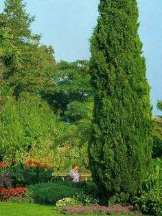 Floricultura Multiflora Fernandopolis: Uso correto