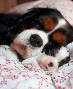 Mom and little dog
