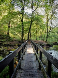 Hiking trails seem to include an old wooden bridge (Photo: philopenshaw)