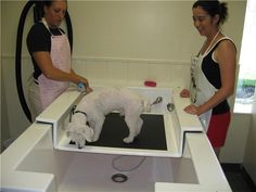 I like the idea of being able to add different height levels to one tub Dog Grooming Shop, Dog Grooming Salons, Dog Grooming Business, Dog Bath Tub, Dog Illnesses, Dog Washing Station, Pet Spa, Dog Cafe, Pet Hotel